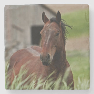 Viewing horses in a field in the Palouse Stone Coaster