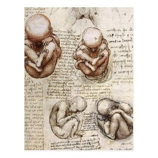 Views of a Foetus in Womb.jpg by Leonardo Vinci Postcard