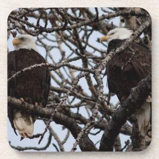 Vigilant Bald Eagles Beverage Coasters