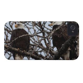 Vigilant Bald Eagles Blackberry Bold Case