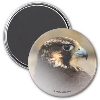 Vignetted Profile of a Peregrine Falcon 7.5 Cm Round Magnet