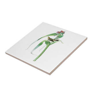 Vigor's Warbler John James Audubon Birds America Small Square Tile