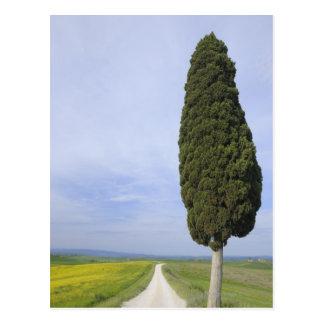 Ville di Corsano, Monteroni d'Arbia, Siena Postcard