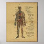 Vinatge German Anatomy Print Arteries Nerves