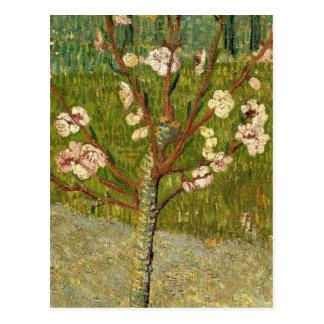 Vincent Van Gogh Almond Tree In Blossom Vintage Postcard