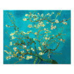Vincent Van Gogh Blossoming Almond Tree Branches Photograph