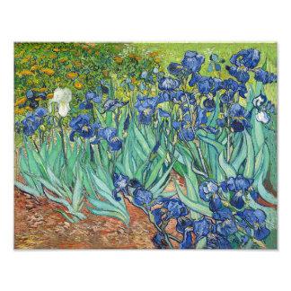 "Vincent Van Gogh ""Irises"" 1888 Reproduction Print Photo Art"