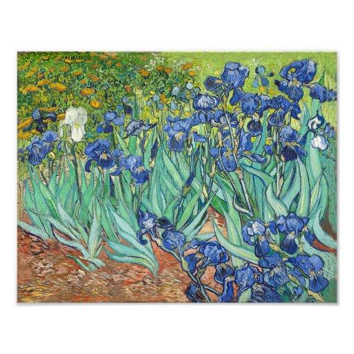 "Vincent Van Gogh ""Irises"" 1888 Reproduction Print Photographic Print"