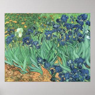 Vincent van Gogh | Irises, 1889 Poster