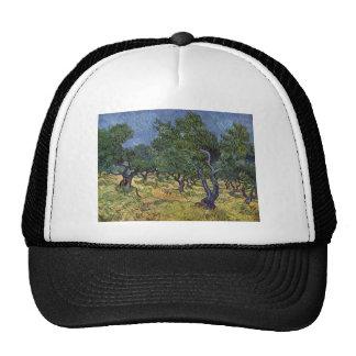 Vincent van Gogh - Olive Grove Cap
