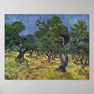 Vincent van Gogh - Olive Grove Poster