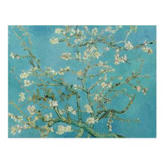 Vincent Van Gogh's Almond Blossoms Postcard