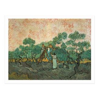 Vincent van Gogh   The Olive Pickers, Saint-Remy Postcard