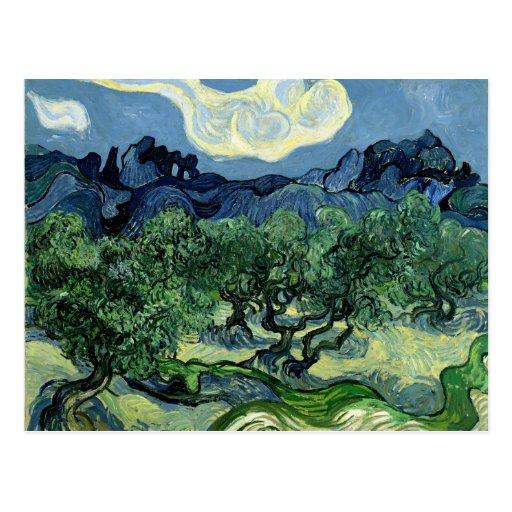 Vincent van Gogh's Olive Trees (1889) Postcards