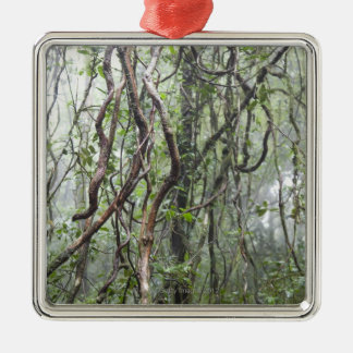 vine and branches twisted in rainforest christmas ornament