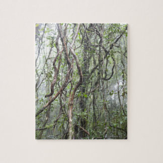 vine and branches twisted in rainforest jigsaw puzzle