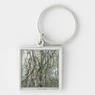 vine and branches twisted in rainforest key ring
