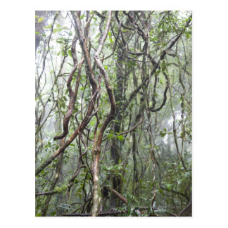 vine and branches twisted in rainforest postcard