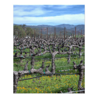 Vines In Winter Napa California Flyer