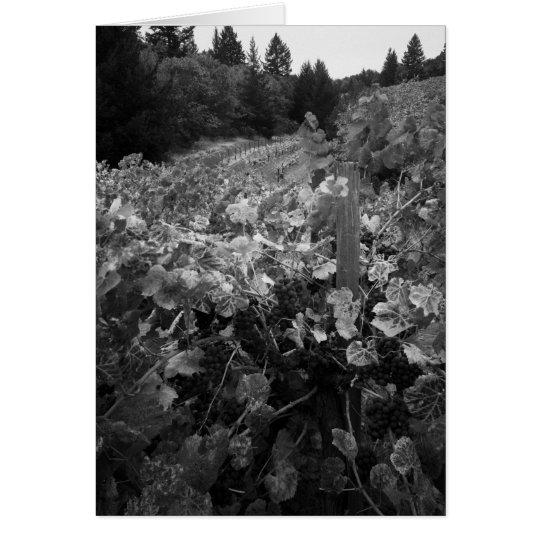 Vineyard and Hills, Draper Vineyard, 1966 Card