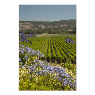 Vineyard and Purple Flowers Photography Print Art Photo