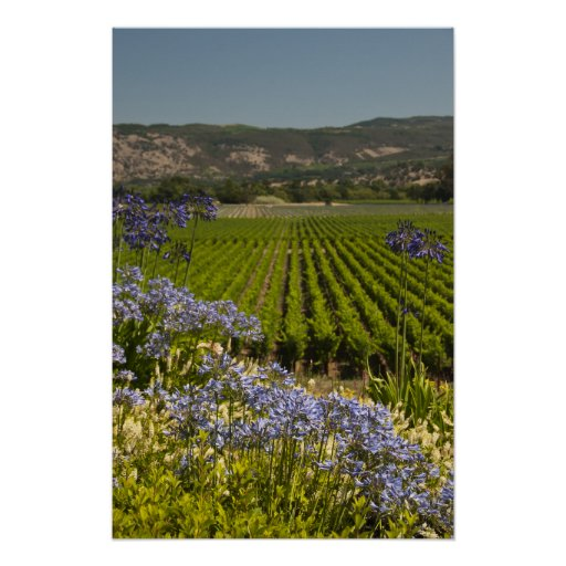 Vineyard and Purple Flowers Poster