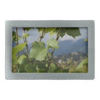 vineyard belt buckle