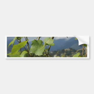 vineyard bumper sticker