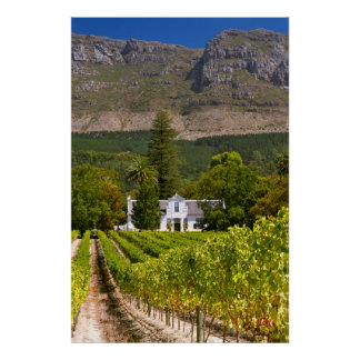 Vineyard, Cape Town, Western Cape, South Africa 2 Poster