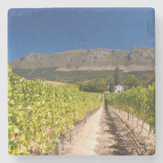 Vineyard, Cape Town, Western Cape, South Africa 2 Stone Coaster