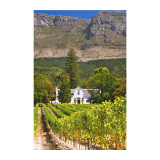 Vineyard, Cape Town, Western Cape, South Africa Canvas Print