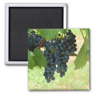 vineyard grapes magnet