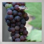 Vineyard in Italy Poster