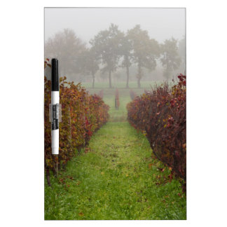 vineyard in the fog in autumn dry erase board