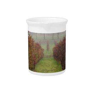 vineyard in the fog in autumn pitcher