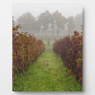 vineyard in the fog in autumn plaque