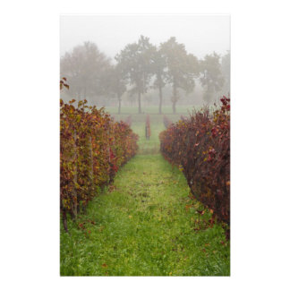 vineyard in the fog in autumn stationery