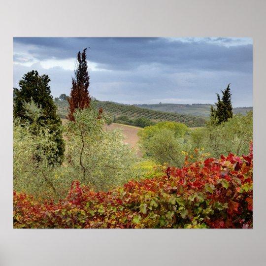 Vineyard near Montalcino, Tuscany, Italy Poster