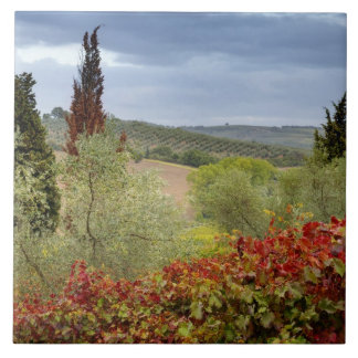 Vineyard near Montalcino, Tuscany, Italy Tile
