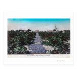 Vineyard Scene of Grapes DryingKingsburg, CA Post Cards