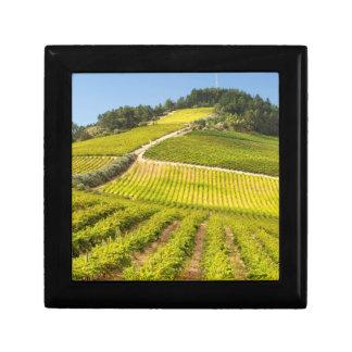 Vineyard, Stellenbosch, Western Cape Gift Box