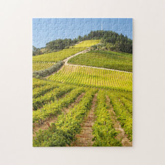 Vineyard, Stellenbosch, Western Cape Jigsaw Puzzle