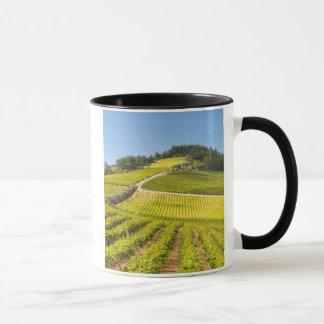Vineyard, Stellenbosch, Western Cape Mug