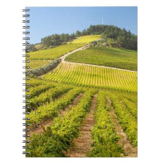 Vineyard, Stellenbosch, Western Cape Notebook