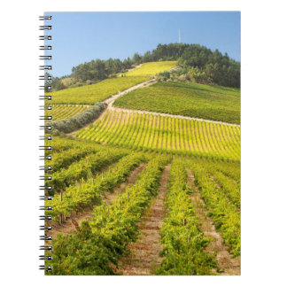 Vineyard, Stellenbosch, Western Cape Notebooks