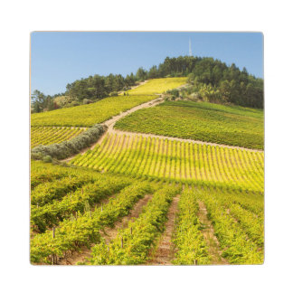 Vineyard, Stellenbosch, Western Cape Wood Coaster