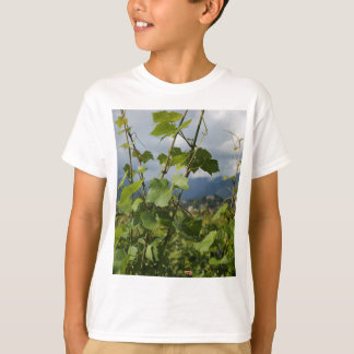 vineyard T-Shirt