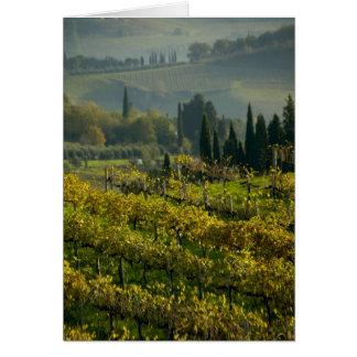 Vineyard, Tuscany, Italy Cards