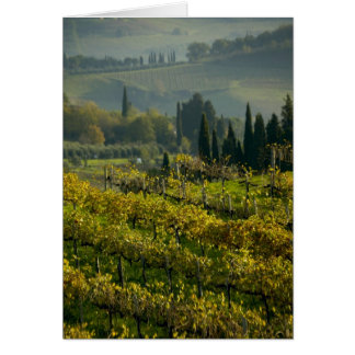 Vineyard, Tuscany, Italy Greeting Card