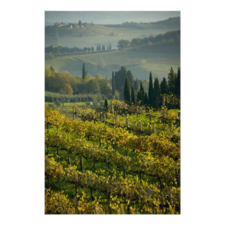 Vineyard, Tuscany, Italy Photo Print